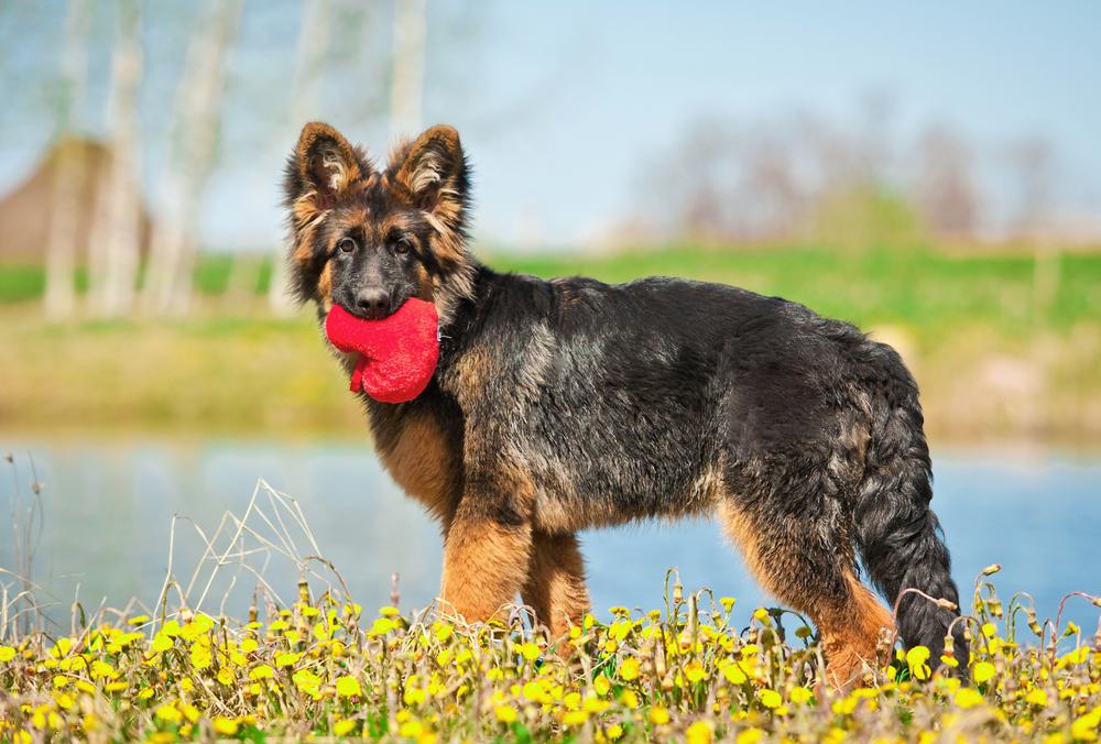 Przygotowania psa do wiosny