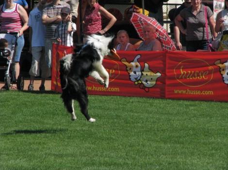 Wystawa psów rasowych 2010 r.